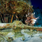 Lionfish on the Corsair
